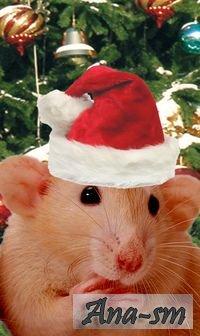 Год крысы 2008 год