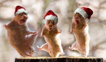 Как встречать 2008 год - год Коричневой (Земной) Крысы?